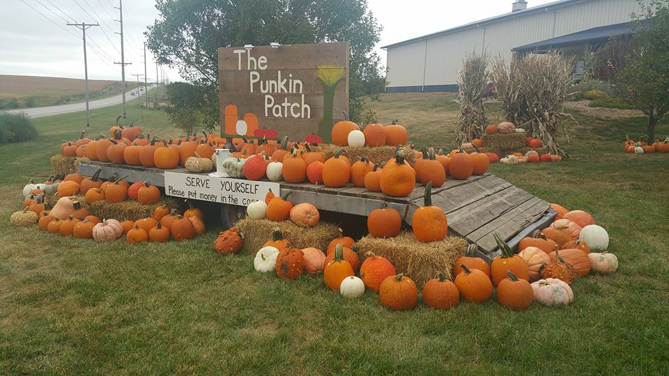 OehlerkindPumpkinPatch